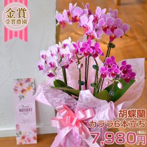 母の日ギフト ミニ 胡蝶蘭 ピコラ  3本立ち★6 ※EV プレゼント 花|hanayaka
