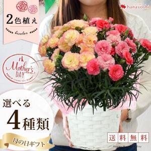 早割 母の日 ギフト プレゼント 花 鉢植え送料無料 1鉢で...