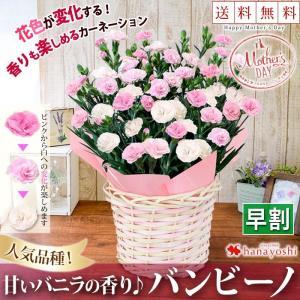 早割 母の日 ギフト 花 鉢植え 送料無料 母の日限定 カー...