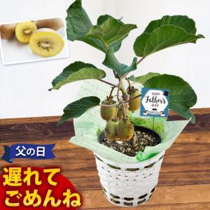 父の日 ギフト 選べる3種類の果樹5号鉢 キウイ ブラックベ...