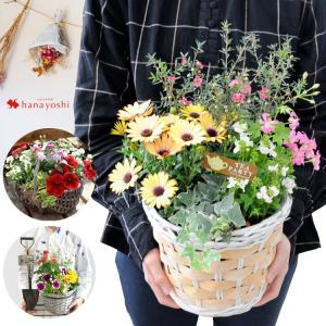 花色とバスケットが選べる 季節のおまかせ寄せ植えinバスケット 旬のお花をたっぷり おしゃれ 鉢植え...