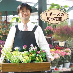 花苗 セット 1ダースの花苗セット 福袋 ラブリーなピックと土のおまけ付き*