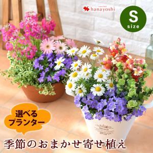 寄せ植え おしゃれ フラワー ギフト 鉢植え 花 お祝い 贈り物 誕生日 プレゼント 季節のおまかせ...