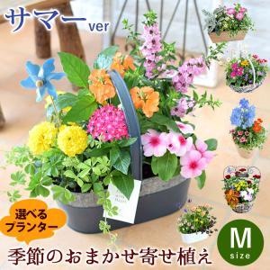 誕生日プレゼント ギフト 新築祝い 引っ越し祝い 贈り物 お祝い 花色とプランターが選べる 季節のお...