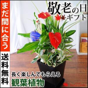 まだ間に合う※一部地域を除く 敬老の日 プレゼント 送料無料 観葉植物の寄せ植え〜緑があるくらしを贈りませんか敬老の日限定ギフト 花 敬老の日ギフト|hanayoshi-y