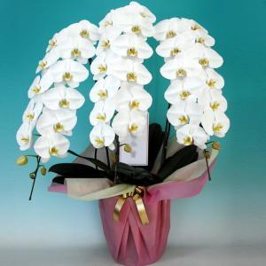 ★胡蝶蘭 商品情報★  【開花状況】 ページ内のお花の写真は、ほぼ満開状態のお花を撮影しています。 ...