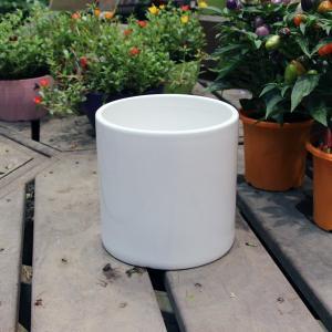 陶器鉢 陶器 鉢 植木鉢 丸 / ホワイトポット丸型 Lサイズ 直径18cm×高さ18cm 底穴あり 白 化粧鉢 円柱 ガーデニング 8905479 送料別 通常配送|handsman
