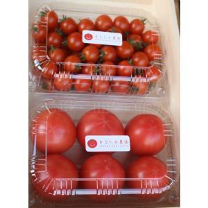 遠州浜松都田marutakaトマト730gとミニトマト650g|hapifullstore