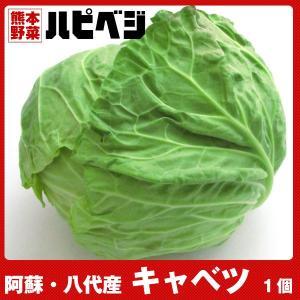 キャベツ【1個】同梱専用 ※こちらの商品は野菜セット購入した方のみの同梱商品になります。