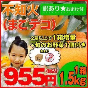 【訳あり1.5kg】2月末より順次発送♪1月末までのご注文限定!!庄村さんが作る熊本県不知火地区特産 不知火(通称デコポン) 旬のお野菜1個のおまけ付♪