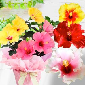 父の日のプレゼントに  色鮮やかな花色が魅力的&長く楽しめる花鉢ギフト 人気急上昇 ロングライフハイ...