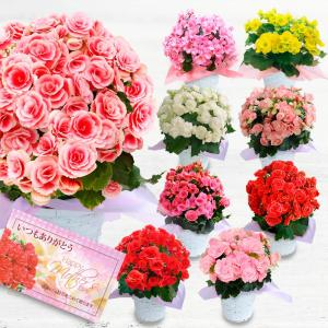 母の日 花 鉢植え 母の日ギフト 鉢花 大輪薔薇咲き リーガース ベゴニア 鉢植え 選べる品種 ボリアス等 籠付き ラッピング 5号付き|happy-garden