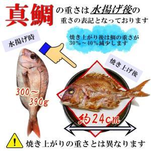 お食い初め 鯛 ハマグリ セット 300g 祝鯛 敷き紙 鯛飾り 祝い箸 焼き鯛 料理 はまぐり 天然 真鯛|hasegawasengyo|05