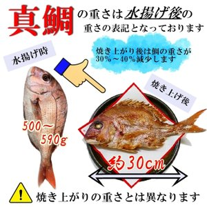 お食い初め 鯛 ハマグリ セット 500g 送料無料 祝鯛 敷き紙 鯛飾り 祝い箸 焼き鯛 料理 はまぐり 天然 真鯛|hasegawasengyo|05