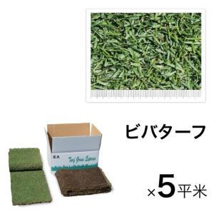 西洋芝 ビバターフ(ケンタッキーブルーグラス)5平米 寒冷地向け天然芝 送料無料|hashibasangyo