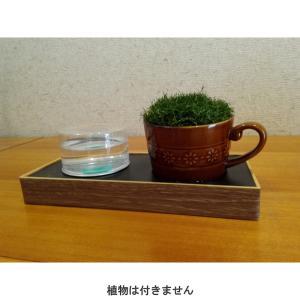 コーヒーカップ型鉢「水世話名人」(自動給水 植木鉢)|hatsumei-net