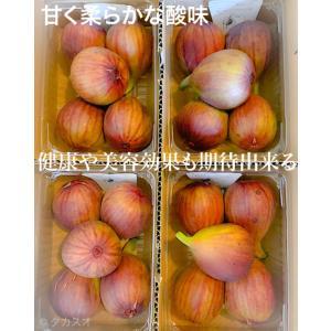 美味しく ジャム や色々な料理に使える イチジク 柔らかくて甘い 鮮度命 いちじく 箱売り いちじく 奈良 和歌山 兵庫