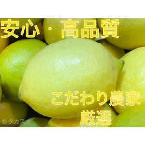 安心 国産 グリーンレモン 2kg 広島等 瀬戸内 3段階の品質確認