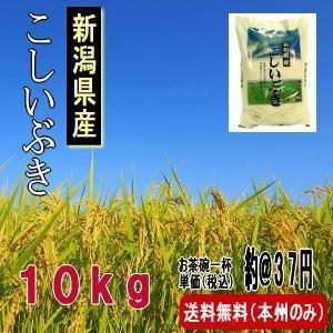 お米 新潟県産こしいぶき 10kg(平成30年産)送料無料(本州のみ) haya-kome
