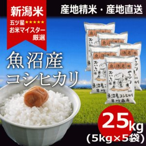 魚沼産コシヒカリ 25kg (5kg×5) 魚沼 こしひかり 令和2年産|haya-kome