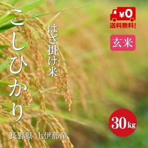 長野県産 こしひかり 「はざ掛け米」 1等米 30年産 玄米 【30kg】|hayashiya-kome