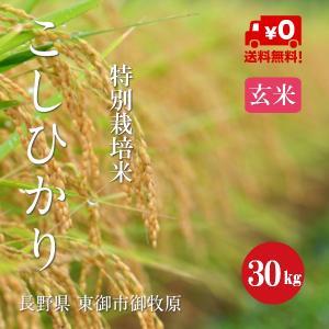 特別栽培米  こしひかり 御牧原産 1等米 30年産 玄米 【30kg】|hayashiya-kome