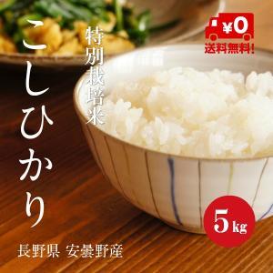 特別栽培米 こしひかり 安曇野産 1等米 30年産 白米 【5kg】|hayashiya-kome