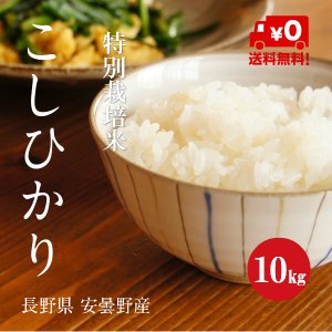 特別栽培米 こしひかり 安曇野産 1等米 30年産 白米 【10kg】|hayashiya-kome