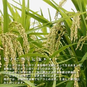 平成29年産 玄米 30kg ひのひかり ヒノヒカリ 九州大分県産|hc7|05