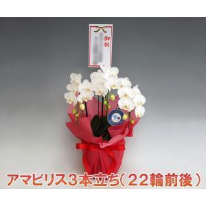 ミニサイズの胡蝶蘭 アマビリス3本立ち  22輪前後 つぼみ含む 洋ラン フラワーギフト heart-flower