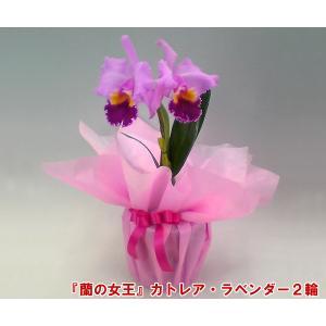 カトレア2輪 インパクト大 最高級の洋蘭 送料無料 蘭の女王|heart-flower