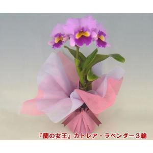 カトレア 3輪 インパクト大 最高級の洋蘭 送料無料 蘭の女王|heart-flower