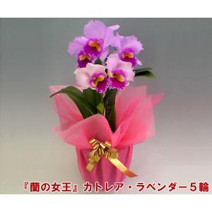カトレア 5輪 インパクト大 最高級の洋蘭 産地直送でお届け 蘭の女王|heart-flower