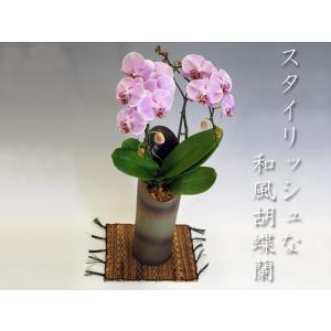 洋蘭の鉄人森田さんが育てた 和風胡蝶蘭 チェリーブロッサムミディサイズ2本立ち |heart-flower