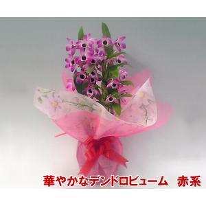 産地直送 デンドロビューム赤系4号鉢 どの角度からでも楽しめる洋らん お祝いの贈り物に最適です。|heart-flower