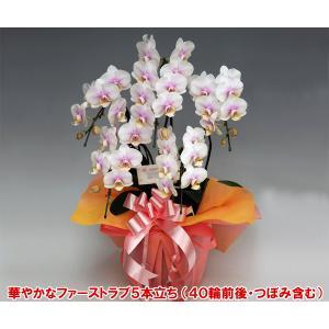 ミディ胡蝶蘭5本立ち40輪前後 つぼみ含む  ファーストラブ つぼみ多めでの出荷となります。 結婚祝い結婚記念日の贈り物に|heart-flower