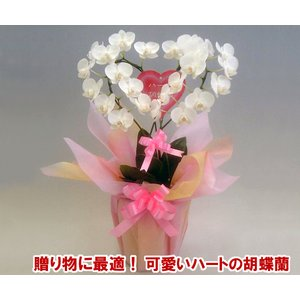 産地直送ネット限定販売 幸福が飛んでくる ハート胡蝶蘭ミディサイズ 結婚祝いや結婚記念日におすすめです|heart-flower