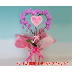 産地直送ネット限定販売 幸福が飛んでくる ハート胡蝶蘭ミディサイズピンク 結婚祝いや結婚記念日におすすめです|heart-flower