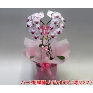 産地直送ネット限定販売 幸福が飛んでくる ハート胡蝶蘭ミディサイズ赤リップ 結婚祝いや結婚記念日におすすめです|heart-flower