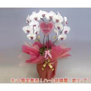 産地直送ネット限定販売 幸福が飛んでくる ハート胡蝶蘭大輪タイプ赤リップ 結婚祝いや結婚記念日におすすめです|heart-flower