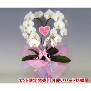 幸福が飛んでくる ハート胡蝶蘭大輪タイプ 結婚祝いや結婚記念日におすすめ 産地直送ネット限定販売|heart-flower