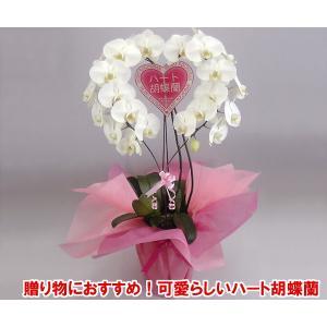 産地直送ネット限定販売 幸福が飛んでくる ハート胡蝶蘭大輪タイプホワイト 結婚祝いや結婚記念日におすすめです|heart-flower