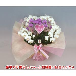 産地直送ネット限定販売 幸福が飛んでくる ハート胡蝶蘭紅白ミックスミディタイプ 結婚祝いや結婚記念日におすすめです|heart-flower
