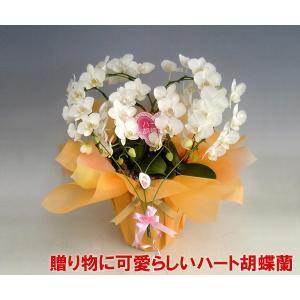 ダブルハート胡蝶蘭ホワイト ミディタイプ 結婚祝いや結婚記念日におすすめです 産地直送ネット限定販売 幸福が飛んでくる|heart-flower