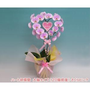 ハート胡蝶蘭大輪タイプ さくらピンク 産地直送ネット限定販売 幸福が飛んでくる  結婚祝いや結婚記念日におすすめです|heart-flower