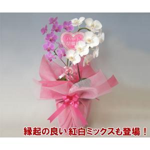 紅白ハート胡蝶蘭ミディサイズ 産地直送ネット限定販売 幸福が飛んでくる  縁起の良い 結婚祝いや結婚記念日に|heart-flower