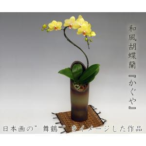 和風胡蝶蘭 舞鶴 ミディ胡蝶蘭8リン前後 珍しい洋蘭|heart-flower