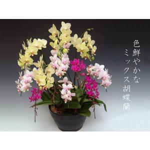 胡蝶蘭 3色ミックス 送料無料 普通の胡蝶蘭では物足りない方に 開店祝い開業祝に |heart-flower