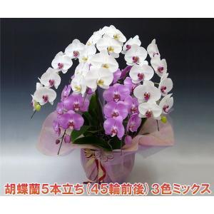 豪華胡蝶蘭5本立ち45輪前後 つぼみ含む 珍しい3色ミックス  贈答品に|heart-flower