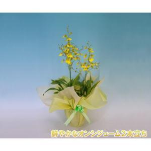 オンシジュームアロハイワナガ2本立ち 鮮やかな黄色の洋ランです。送料無料|heart-flower